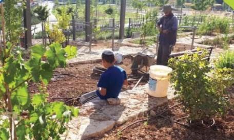 פעילות בגינה הקהילתית